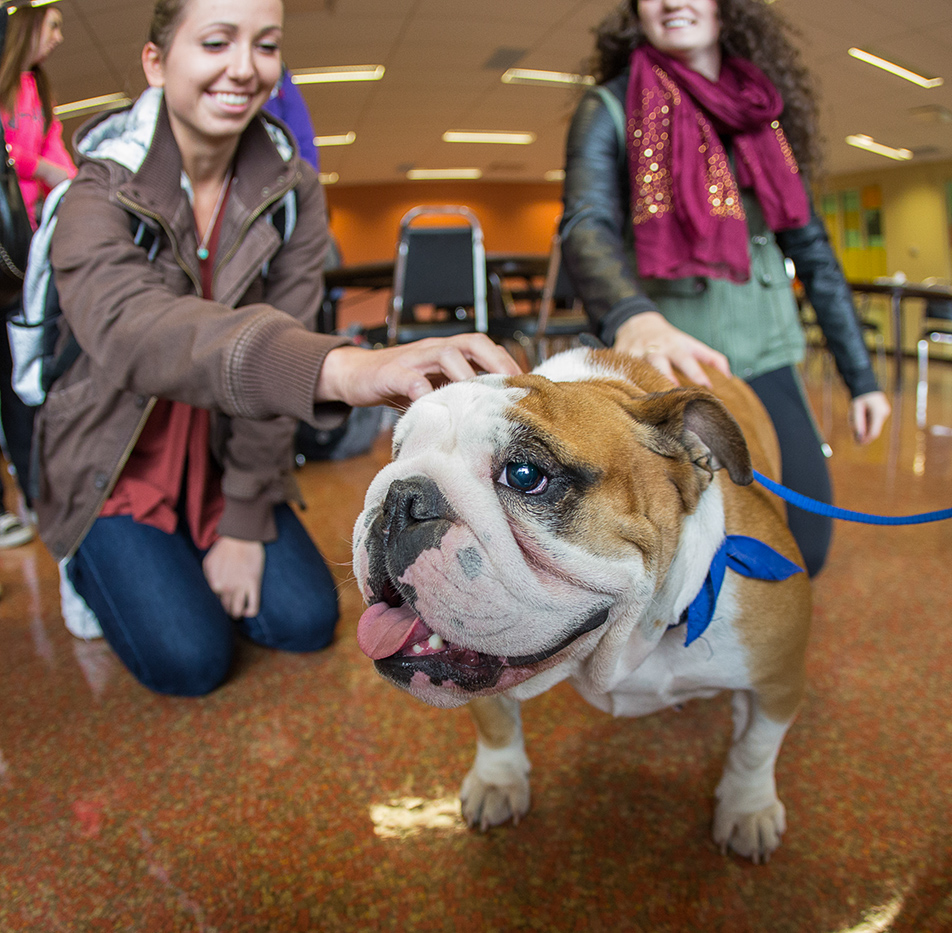 Pet a Puppy: SAIT students unwind with Vegas the dog during the Pet a Puppy event in the Campus Centre at SAIT.  Staff and students got to spend some quality time with several puppies who were on hand for everyone to pet as a means of relieving stress. (Photo by Jenn Sieppert/The Press)