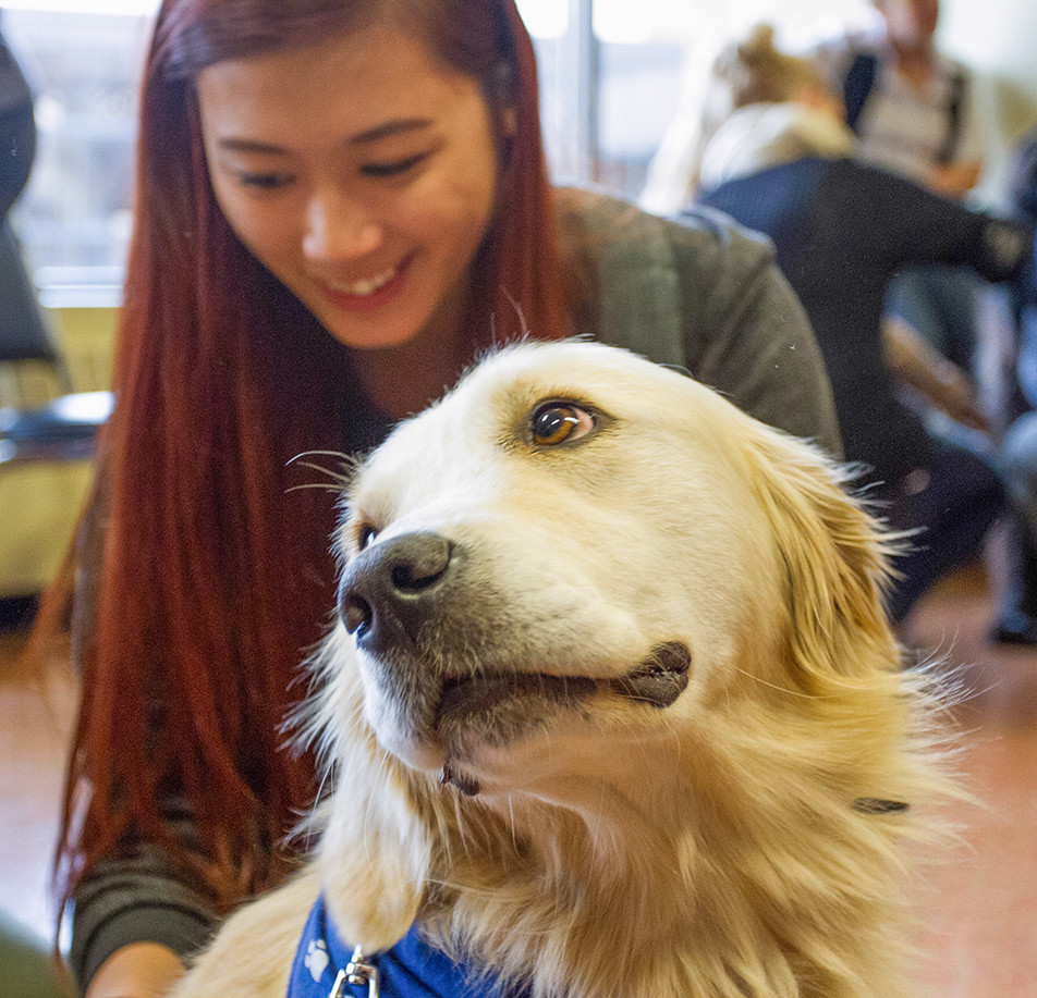 Pet a Puppy: Jade, a white blonde golden retriever receives some affection from SAIT student, Olive Tran during the Pet a Puppy event in the Campus Centre at SAIT.  Staff and students got to spend some quality time with several puppies who were on hand for everyone to pet as a means of relieving stress. (Photo by Laura Wilms/The Press)
