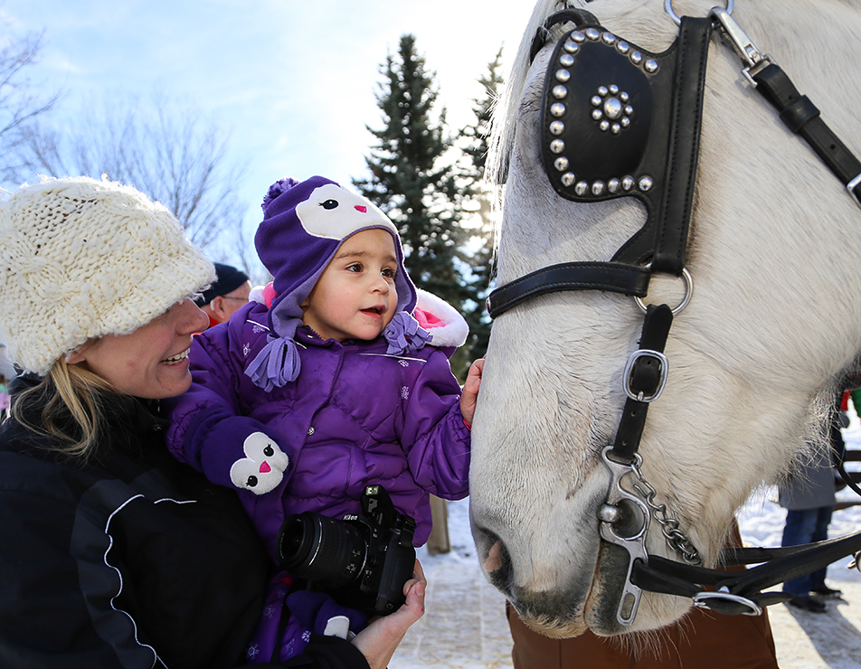 Winter Wonderland Keira Toporowski, 2, gets up close and personal with one of the sleigh horses during the Once Upon a Christmas event at Heritage Park in Calgary on Saturday, Nov. 23, 2013. The event offers guests sleigh rides, Christmas crafts and even a visit with Santa. (Photo by Jenn Pierce/The Press)