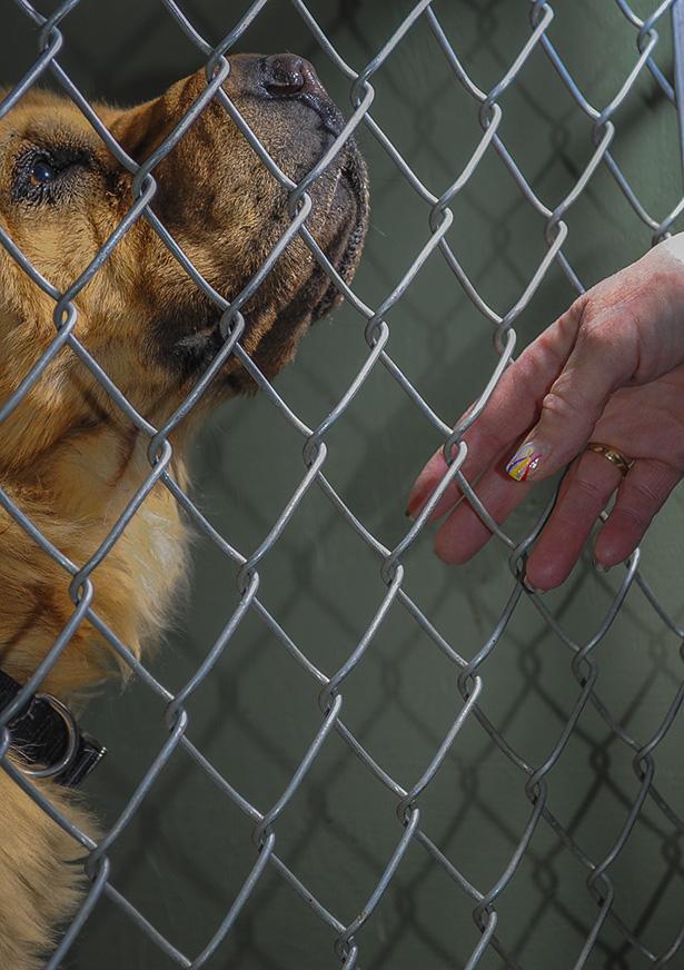 Calgary Rescue dogs