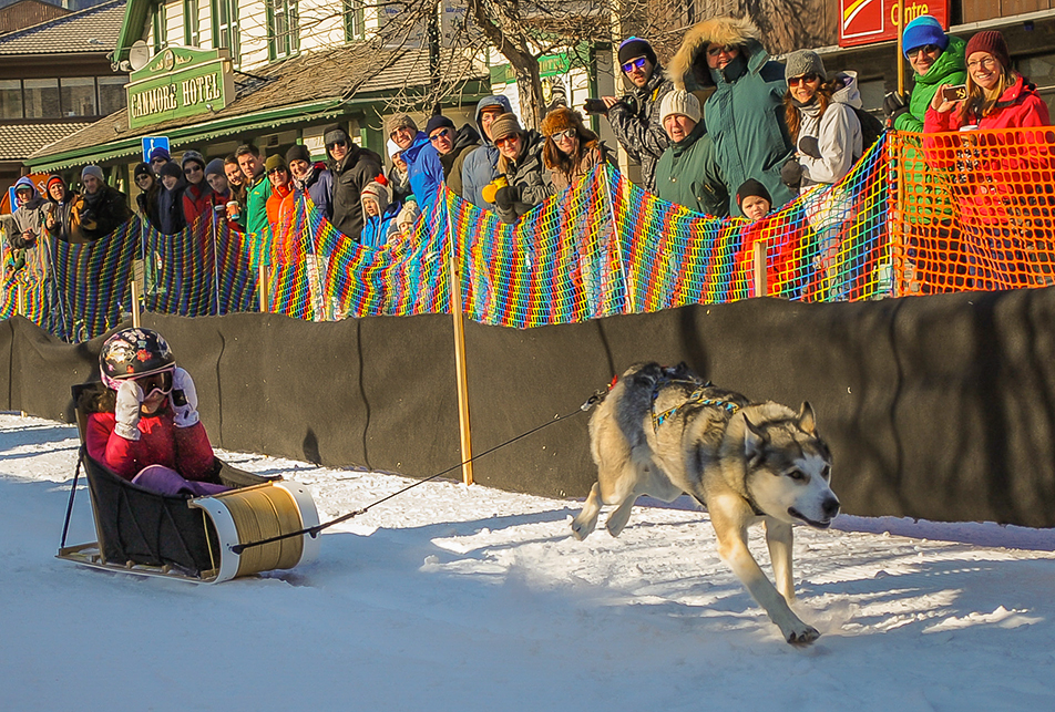 Fun Racing: Julia Reynolds cruises by spectators during her qualification round of the 5th annual Kid' 'n' Mutt race in Canmore on Saturday, Feb. 8, 2014. Reynolds ended up winning first place in the finals. (Photo by Dan Mantai/The Press)