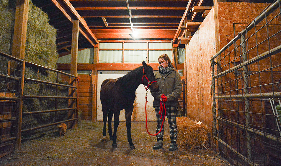 Best Friends: Julianne Uchytil spends time with an adopted, unnamed filly at her home in Millarville on Monday, Nov. 2, 2015. Uchytil belongs to a club which encourages senior members to improve their horsemanship skills. (Photo by Madison Uchytil/The Press)