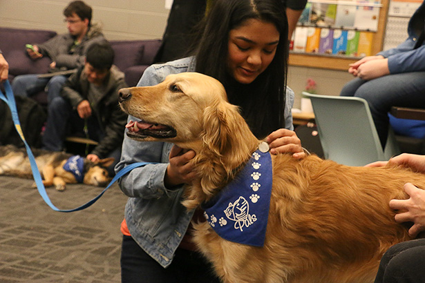 Tally loves the attention: SAITSA held dog day where they invited volunteer dogs from PALS (Pet Access League Society) to visit students Tuesday, Feb. 23, 2016. (Photo by Tina Amini/The Press)
